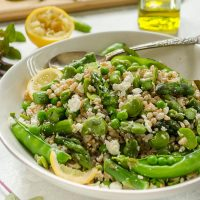 Spring farro salad in white bowl with spoon and lemon slices