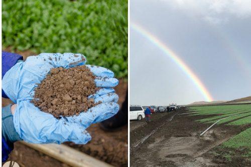 earthbound-farm-organic-collage-1