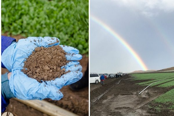 Collage of handful of organic soil and rainbow over spinach field