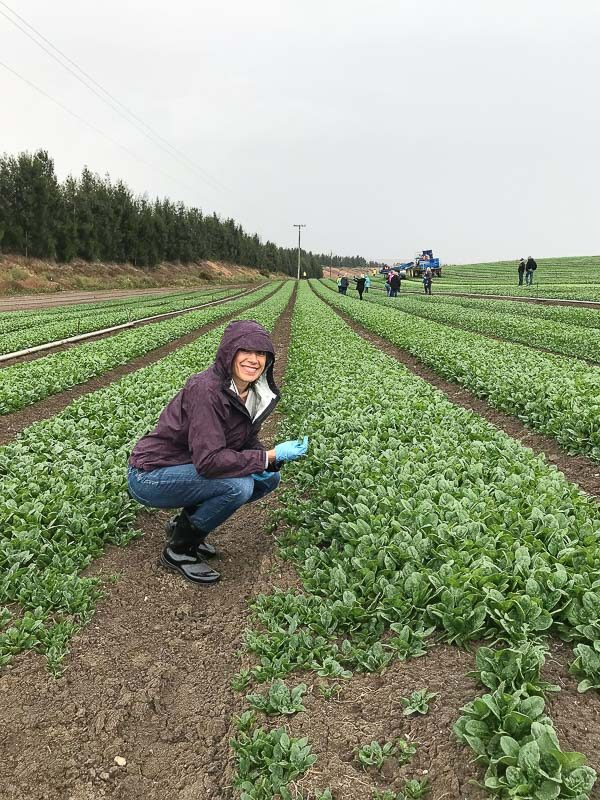 Marcie in spinach field
