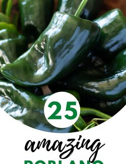 25 Poblano Pepper Recipes long pin